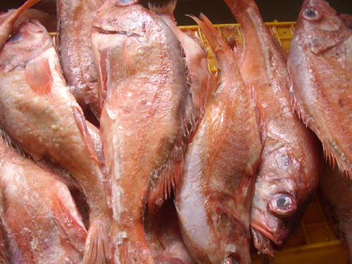 Redfish fillet frozen redfish fillets redfish filet for Red fish fillet